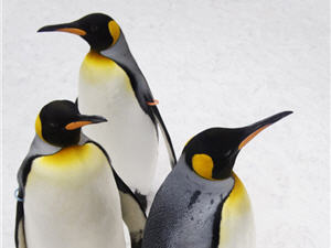 13481-20130217_penguins-header